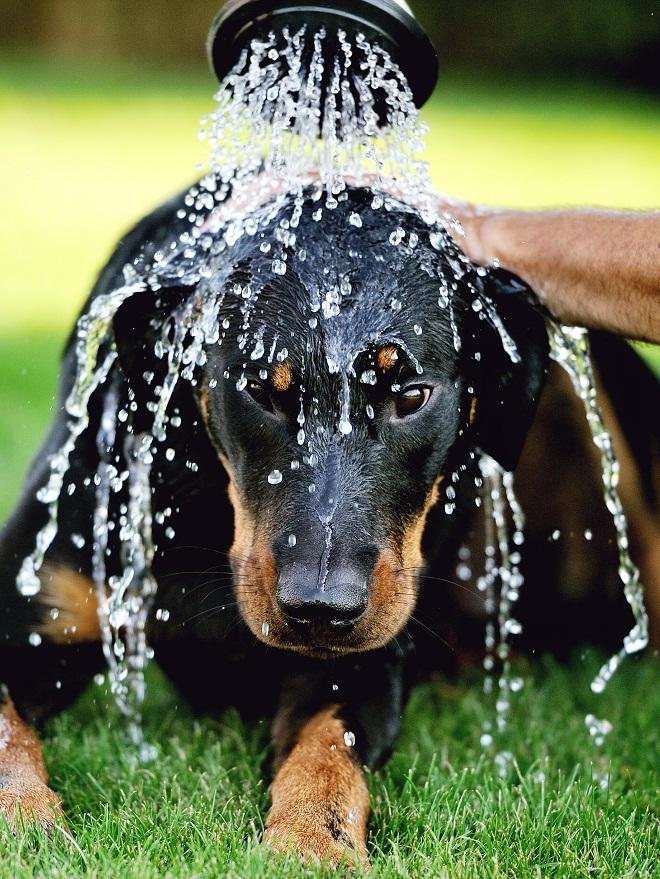Cachorro-se-refresca-con-manguera
