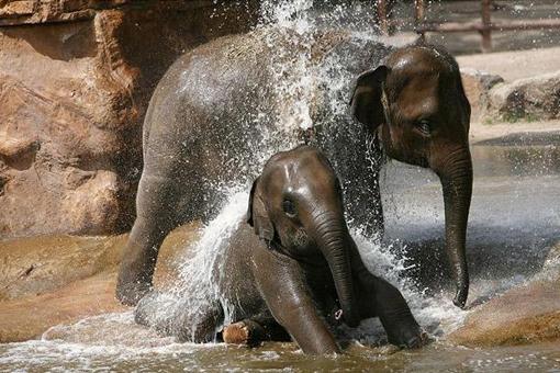 elefantes-tomando-regaderazo